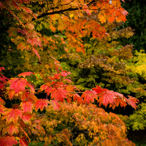 Colours of Autumn-04