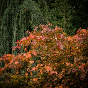 Colours of Autumn-11