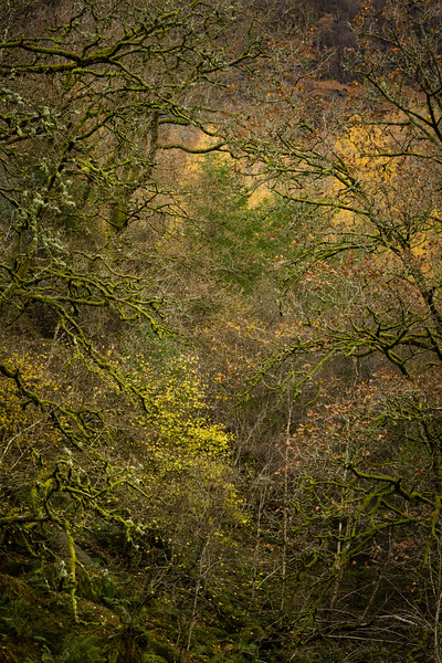 Borrowdale Woodland, Autumn