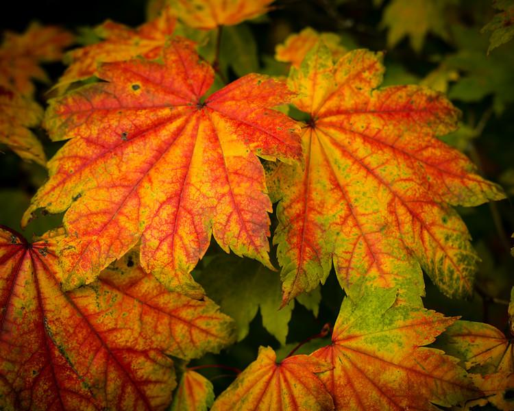 Colours of Autumn-05
