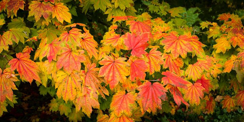 Colours of Autumn-01