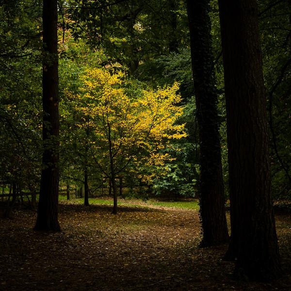 Colours of Autumn-07