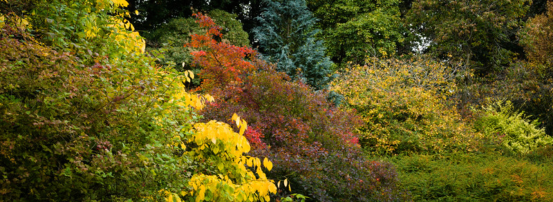 Colours of Autumn-08