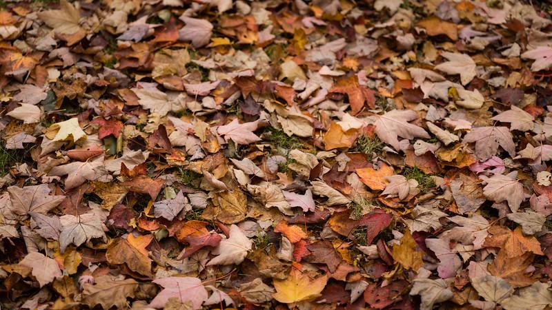Colours of Autumn-09