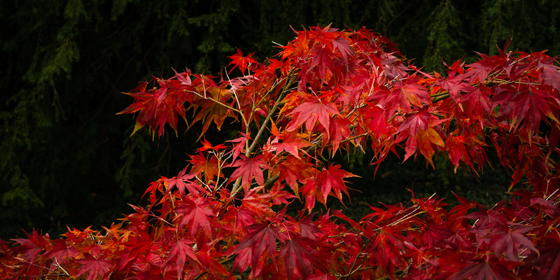 Colours of Autumn-06