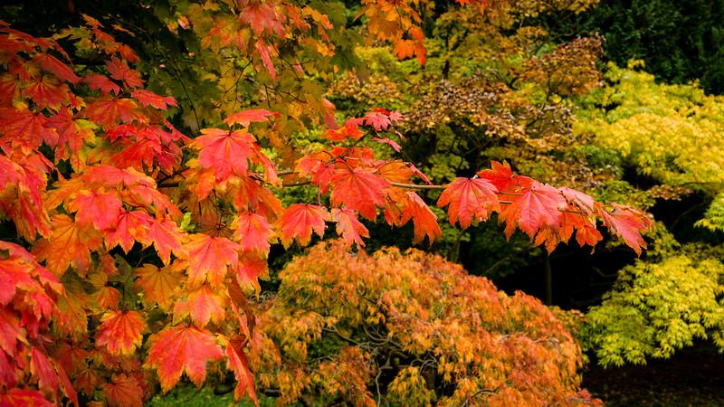 Colours of Autumn-03