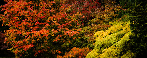 Colours of Autumn-10