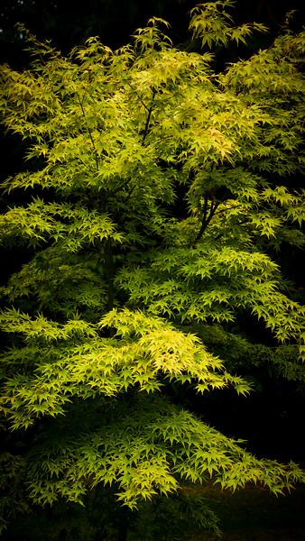 Colours of Autumn-12