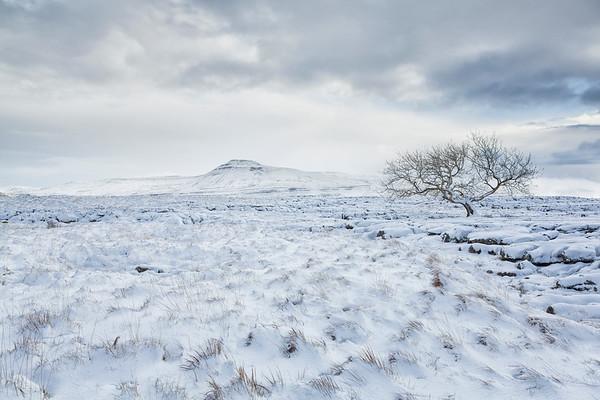 Fresh Snowfall Twisleton