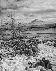 Tree Twistleton Winter