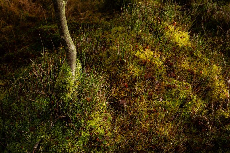 Forest Carpet Detail
