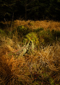 Tree Stump with Grasses