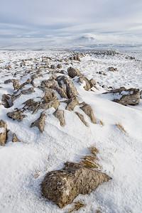 Winter Windswept