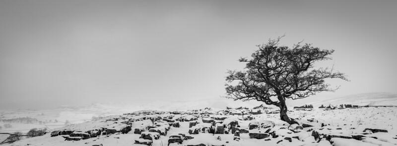 Winter Hawthorn at Winskill