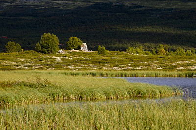 Fokstumyra nature reserve, Dovre mountains