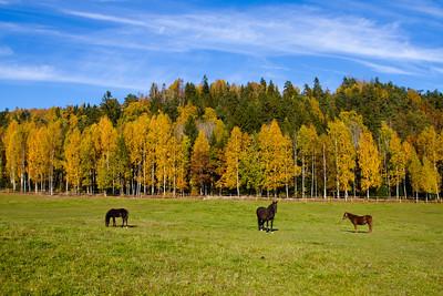 Horses in the autumn colored surroundings at Øvre Gjerdal farm
