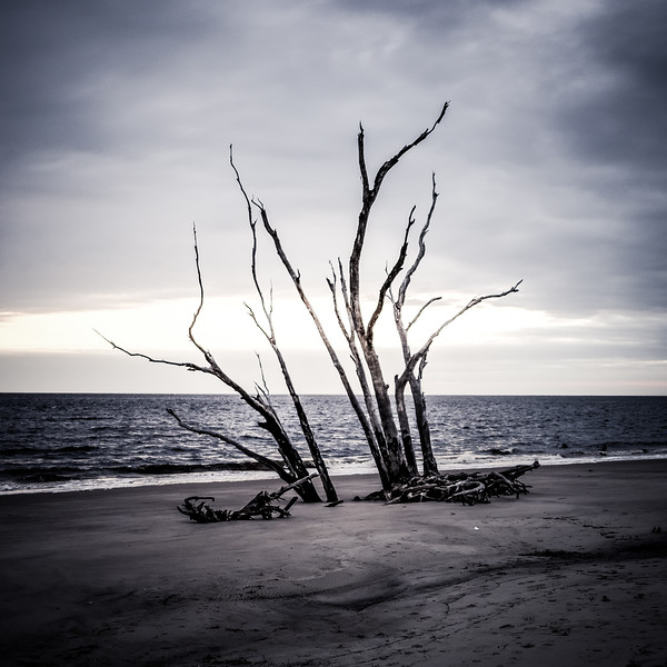 Boneyard Beach, Jacksonville, Florida '19