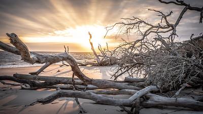 Boneyard Beach, Jacksonville, Florida '19