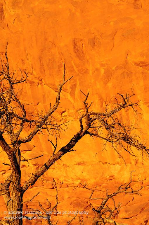 Burning Bush, Arches National Park