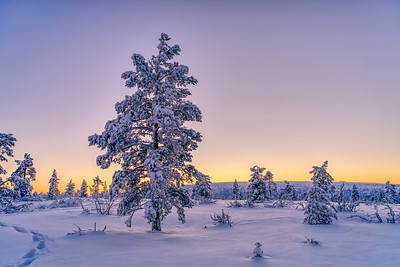Winter tree in the sunset