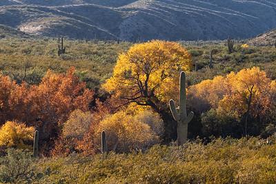Sonoran Autumn