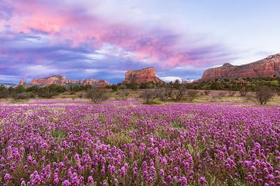 Clover Meadow Sunrise