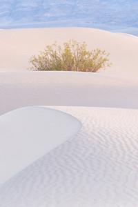 Sunny Sands