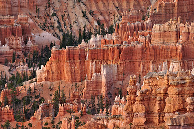 Morning Glow at Bryce