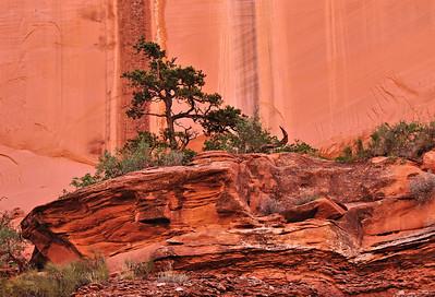 Planter Rock