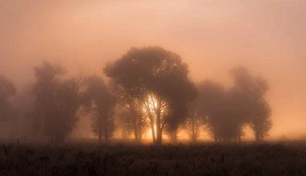 Burning Fog