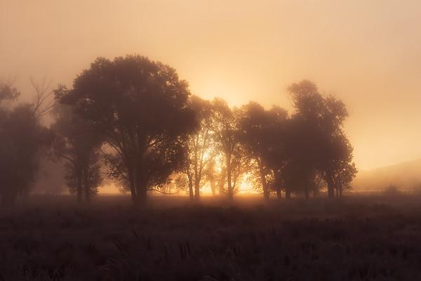 Foggy Gold