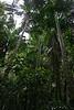 Fraser Island rain forest, Australia - January 2008