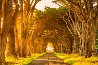 Cypress Tree Tunnel Sunset