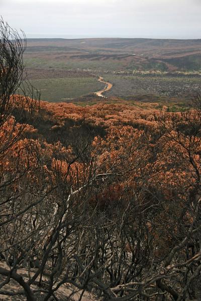 s 20080119 Kangaroo Island Flinder Chase National Park after Forest Fire at Christmas I