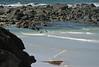 s 20080118 Kangaroo Island Sea Lions