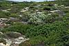 Flinder Chase National Park, Kangaroo Island, Australia - January 2008