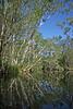 Murdering Creek, Lake Weyba, Australia - January 2008