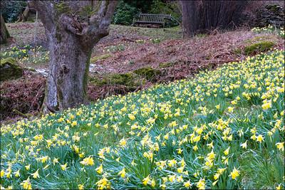24-03-2008 07-56-44 Dora's Field 0033