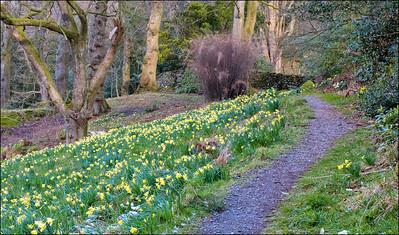 24-03-2008 08-04-19 Dora's Field 0056