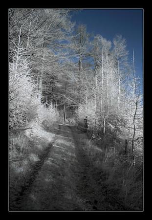 2006-12-01 09-30-12 Thirlmere 0043