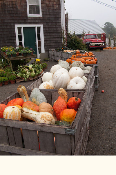 Russell Orchards.  Ipswich, MA.  (On the road to Crane Beach.)
