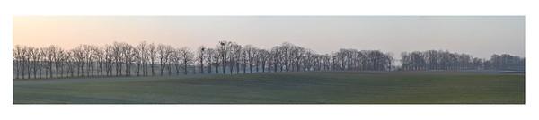bäume3