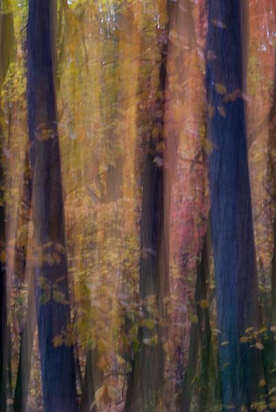 Trees Light Painting
