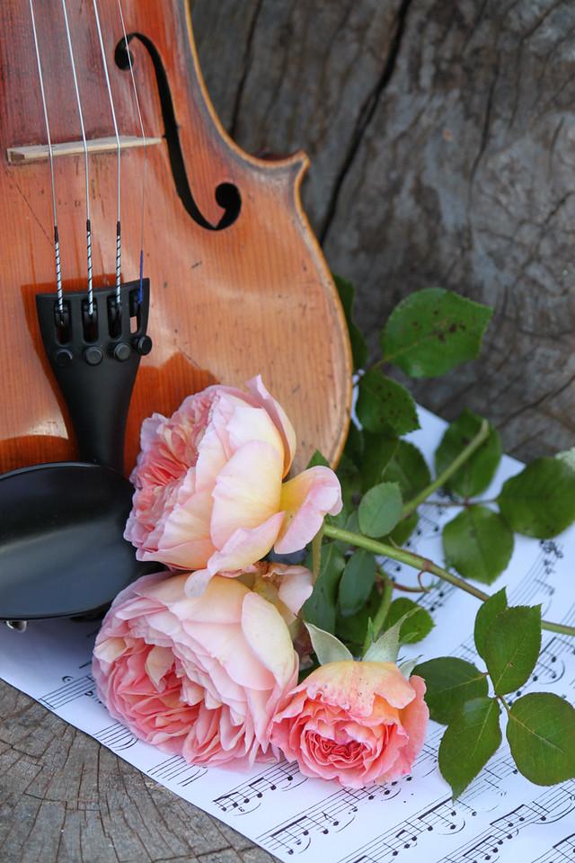 My violin