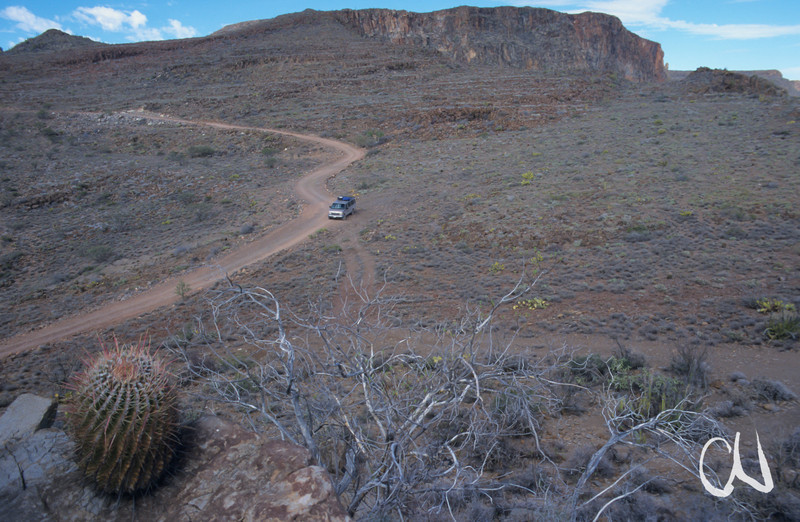 Landschaft mit Fasskaktus, Ferocactus, Sierra de San Francisco, Baja California, Niederkalifornien, Mexiko, Mexico