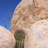 Fasskaktus zwischen Felsen, Ferocactus, Catavinha Boulderfields, Baja California, Niederkalifornien, Mexiko, Mexico