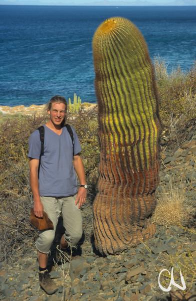 Kaktee, Fasskaktus, Giant Barrel Cactus, Ferocactus diguetii, St.Catalina Island, Baja California, Gulf of California, Sea of Cortez, Niederkalifornien, Mexiko, Mexico