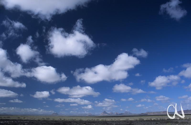 Sonora-Wüste, Baja California, Niederkalifornien, Mexiko, Mexico