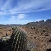 Fasskaktus, Ferocatus, Sierra de San Francisco, Baja California, Niederkalifornien, Mexiko, Mexico