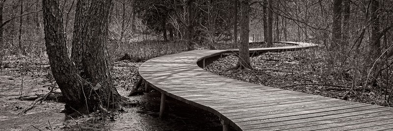 Marsh Boardwalk